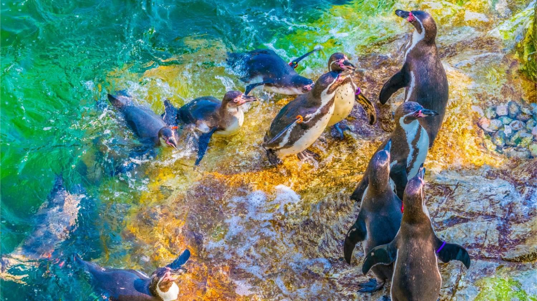 Schönbrunn Zoo (Tiergarten Schönbrunn) - Things To Do In Vienna