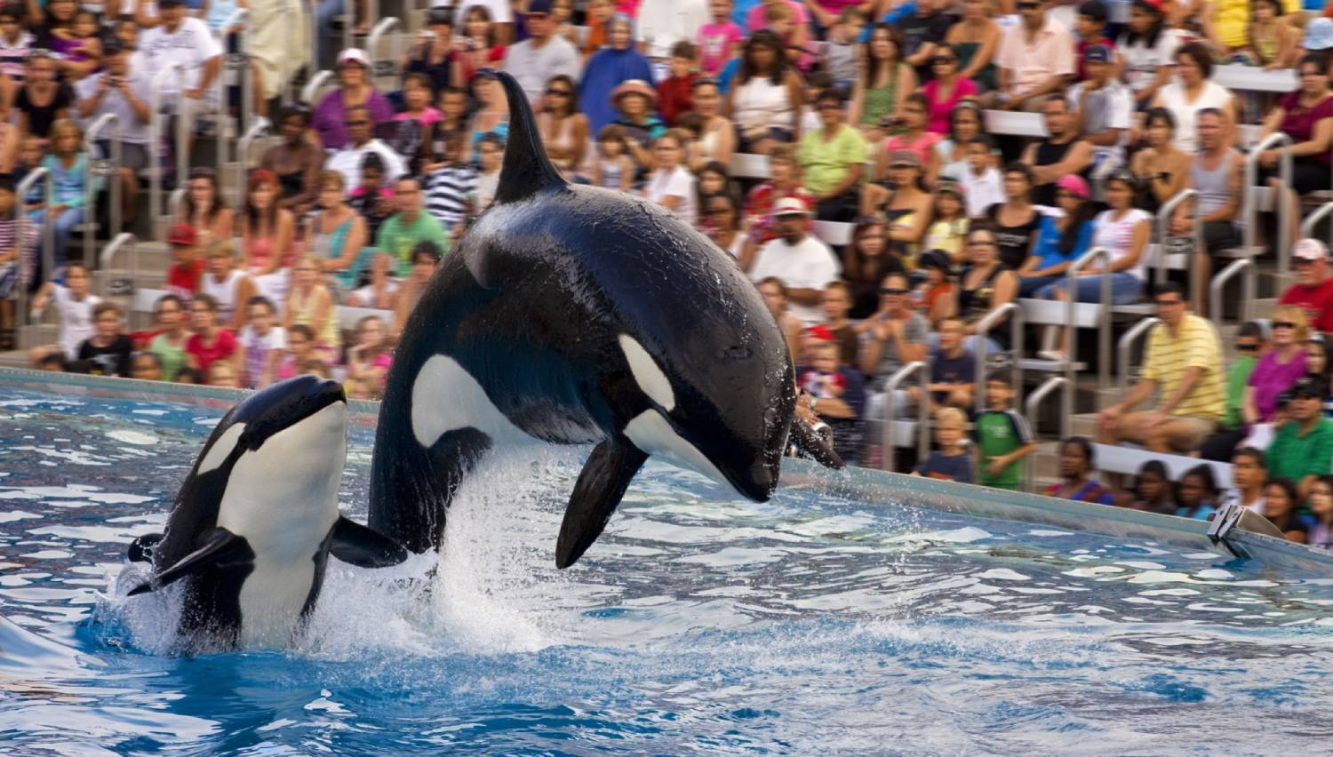SeaWorld San Diego - Things To Do In San Diego
