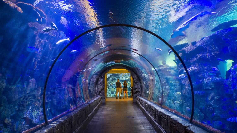 Shark Reef - Things To Do In Las Vegas