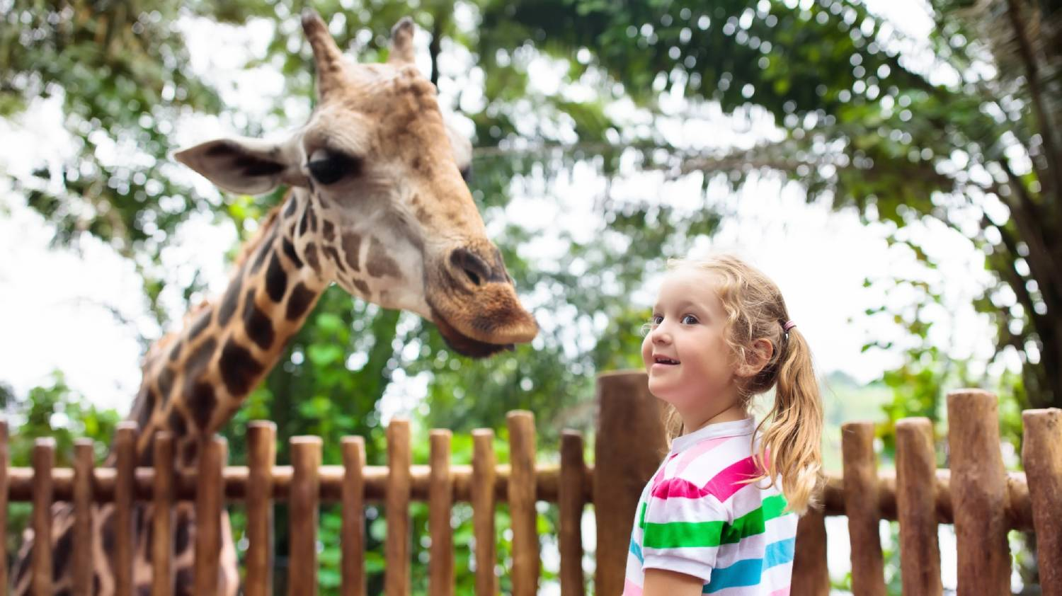 Singapore Zoo Breakfast - Things To Do In Singapore
