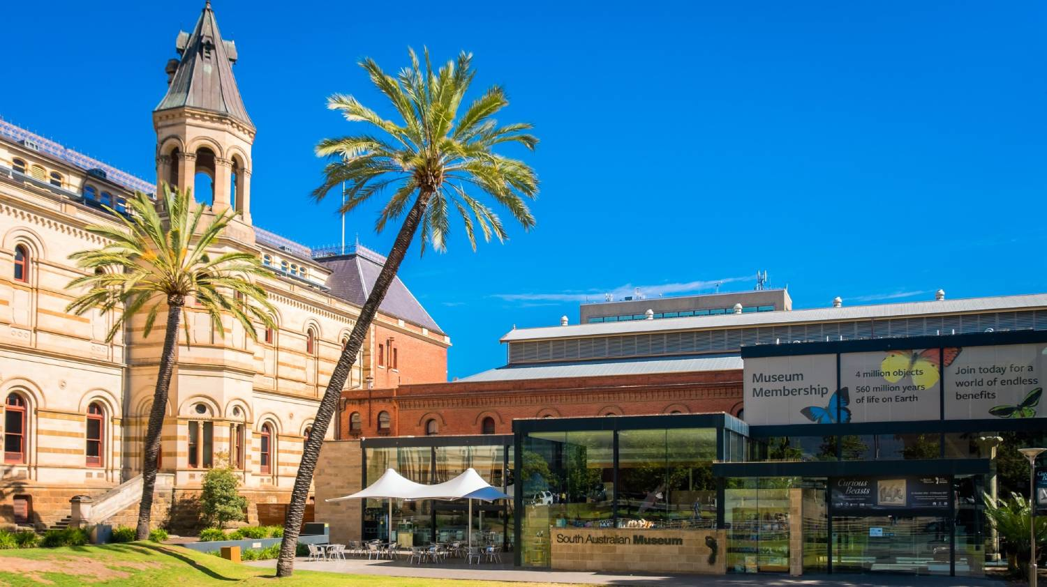 South Australian Museum - Things To Do In Adelaide