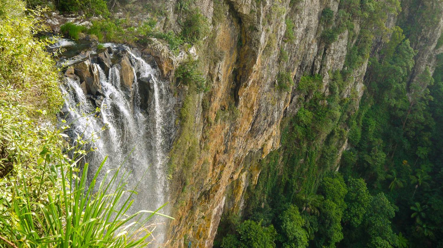 Springbrook National Park - Things To Do On The Gold Coast