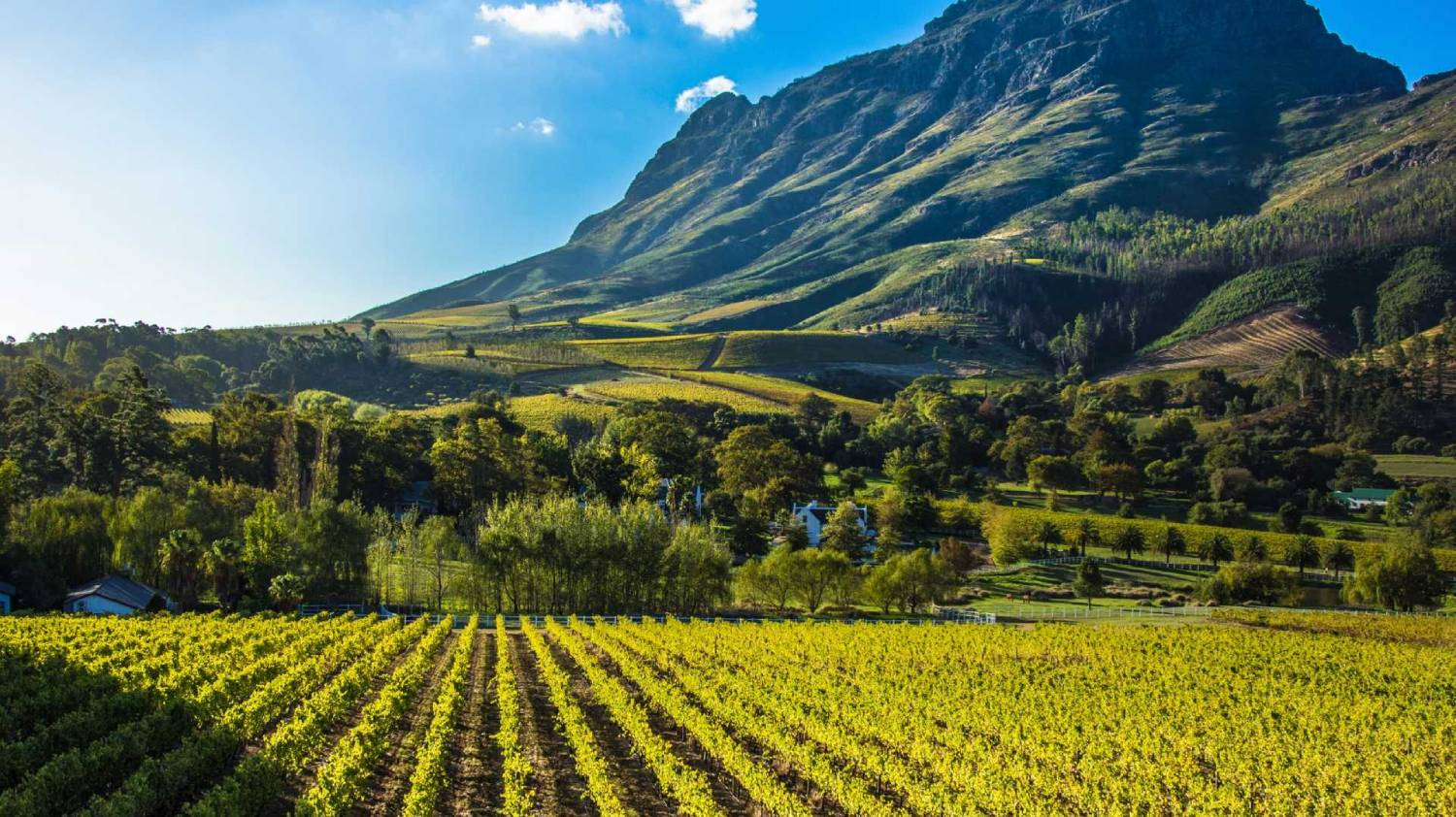 Stellenbosch - The Best Places To Visit In South Africa