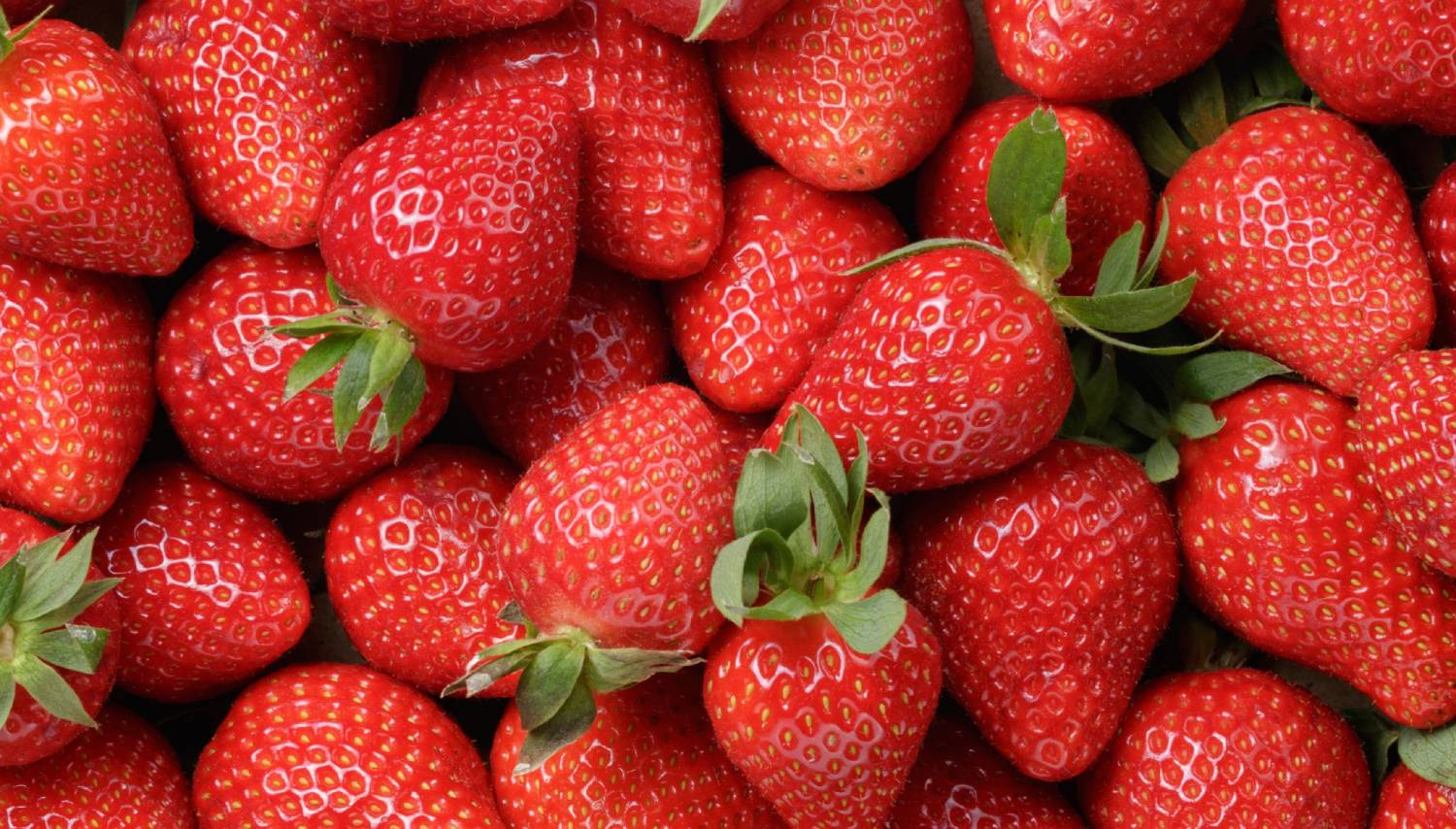 Sunny Ridge Strawberry Farm - Things To Do In Melbourne