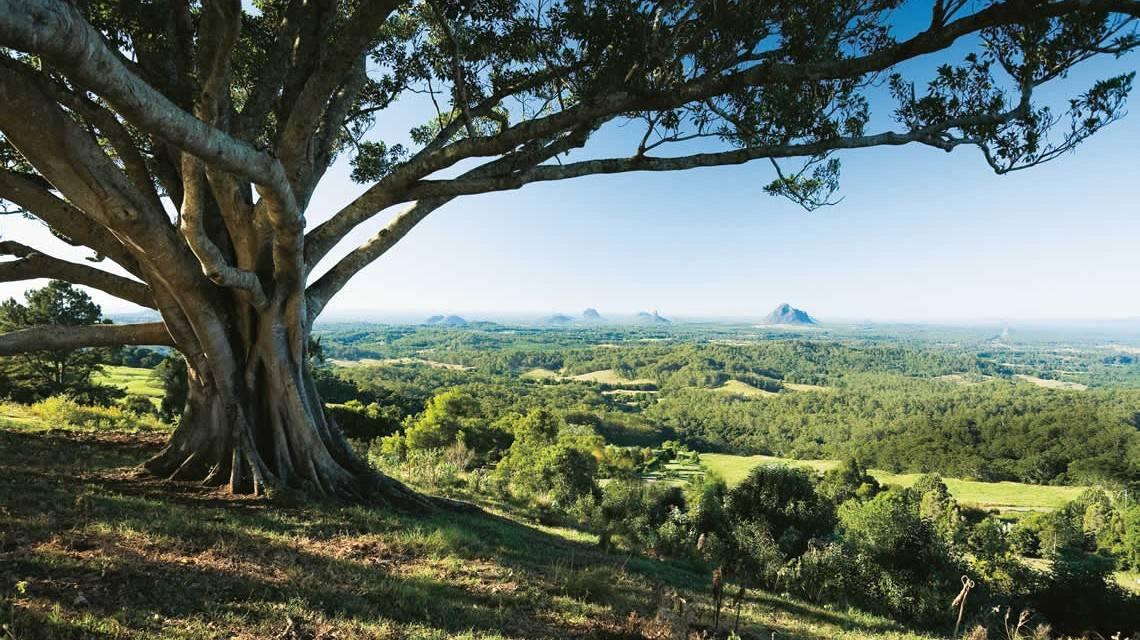 Sunshine Coast Hinterland - Things To Do On The Sunshine Coast