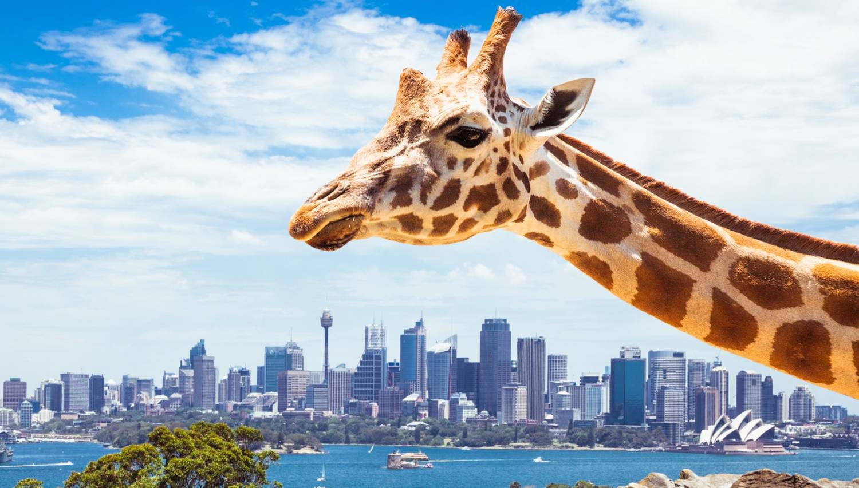Taronga Zoo - Things To Do In Sydney