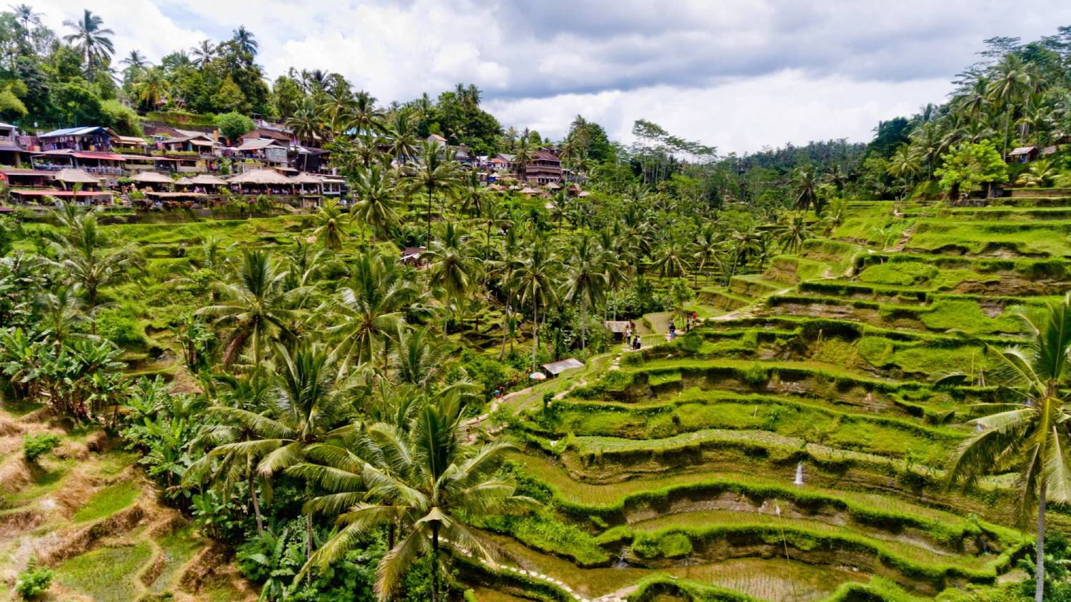 Tegalalang Rice Terrace - Things To Do In Bali