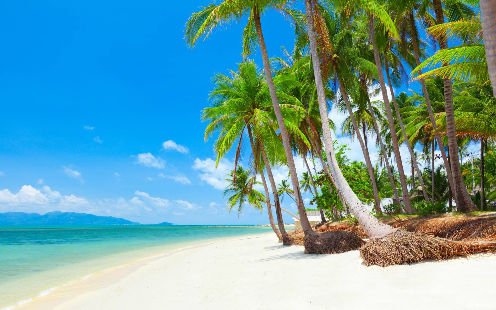 The Best Things To Do In Koh Samui