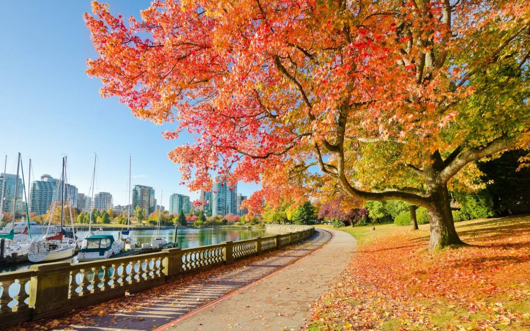 The Best Things To Do In Vancouver