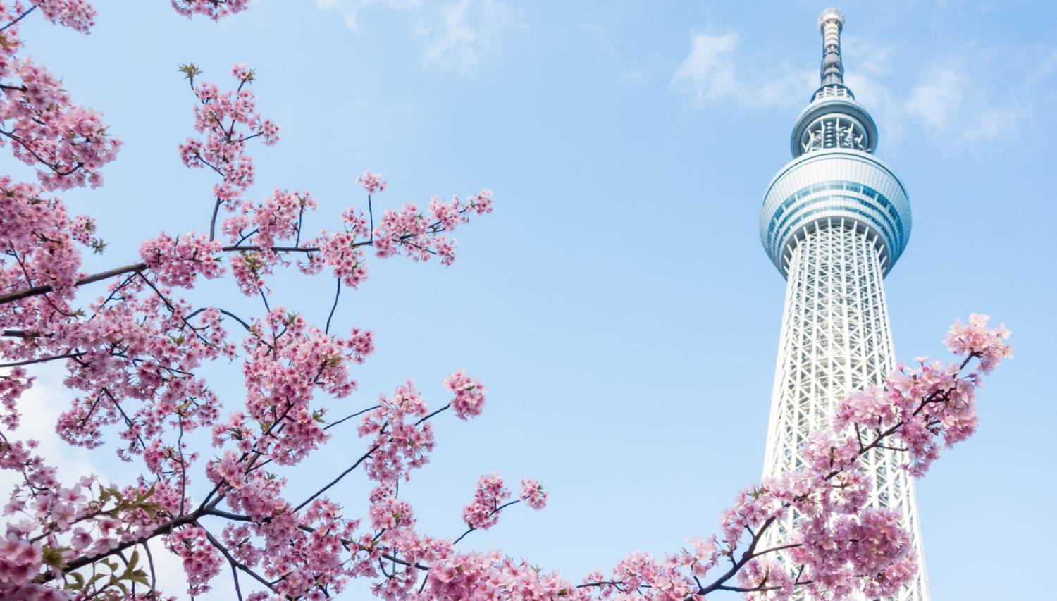 Tokyo Skytree - Things To Do In Tokyo