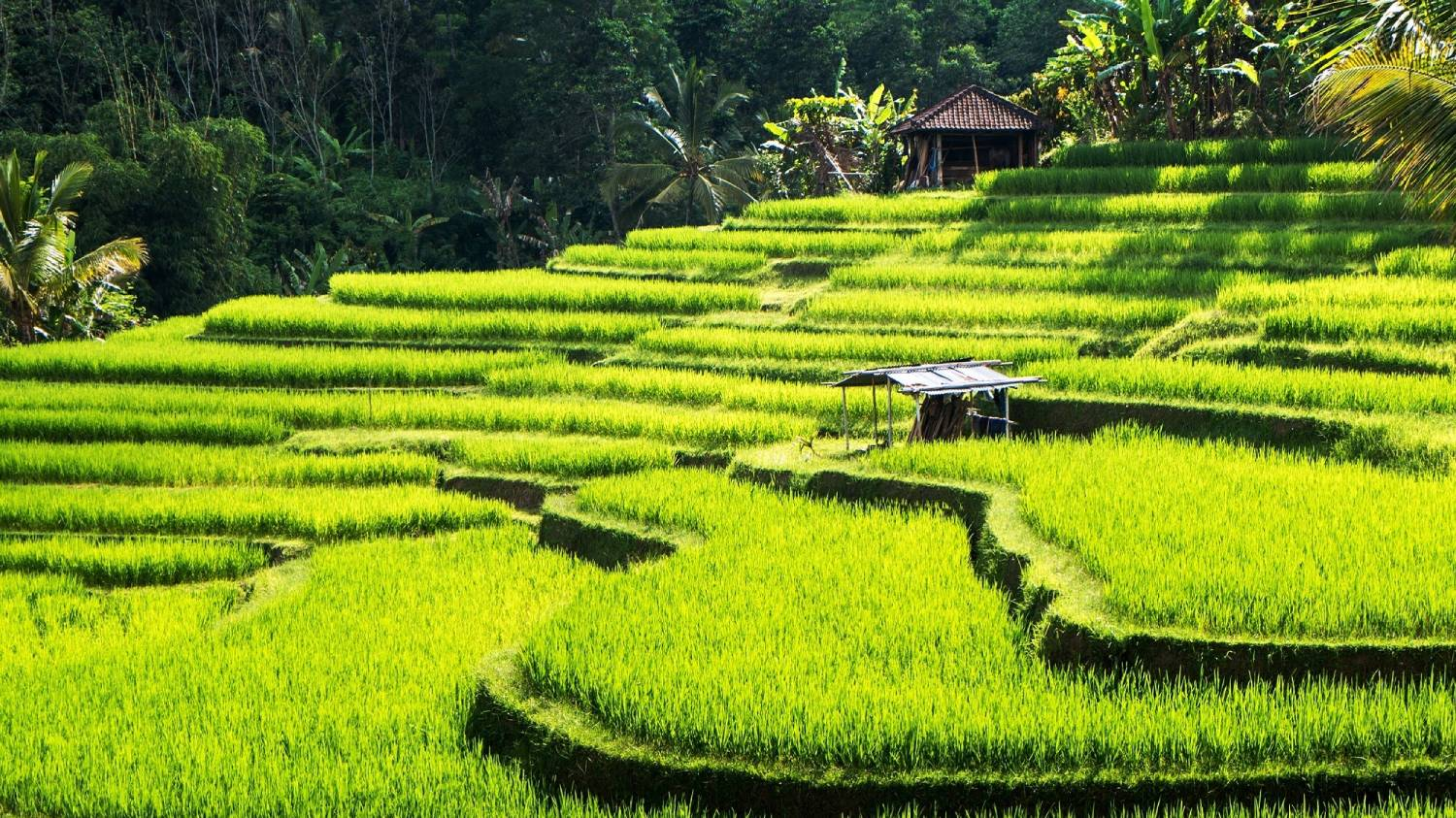 Ubud - Things To Do In Bali