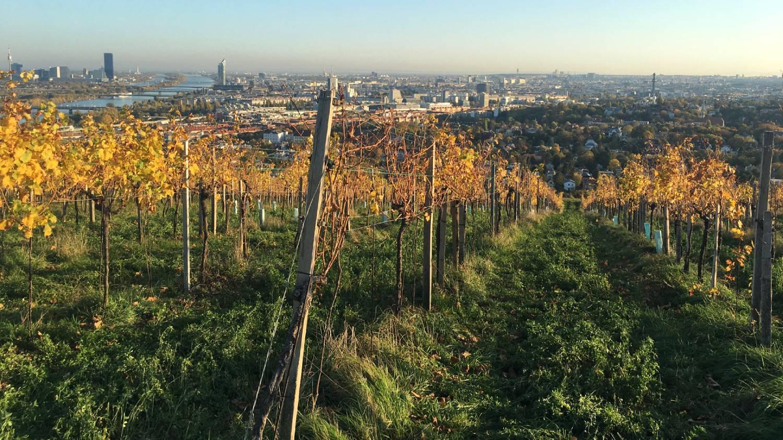 Vienna Wine Walk (Nussberg) - Things To Do In Vienna