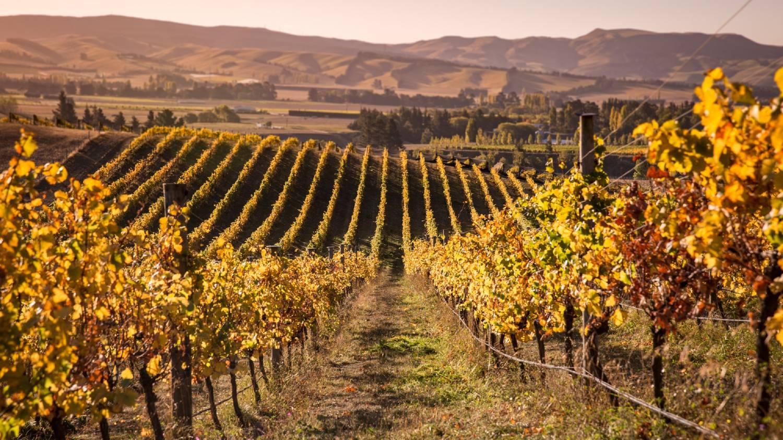 Waipara Springs Winery - Things To Do In Christchurch