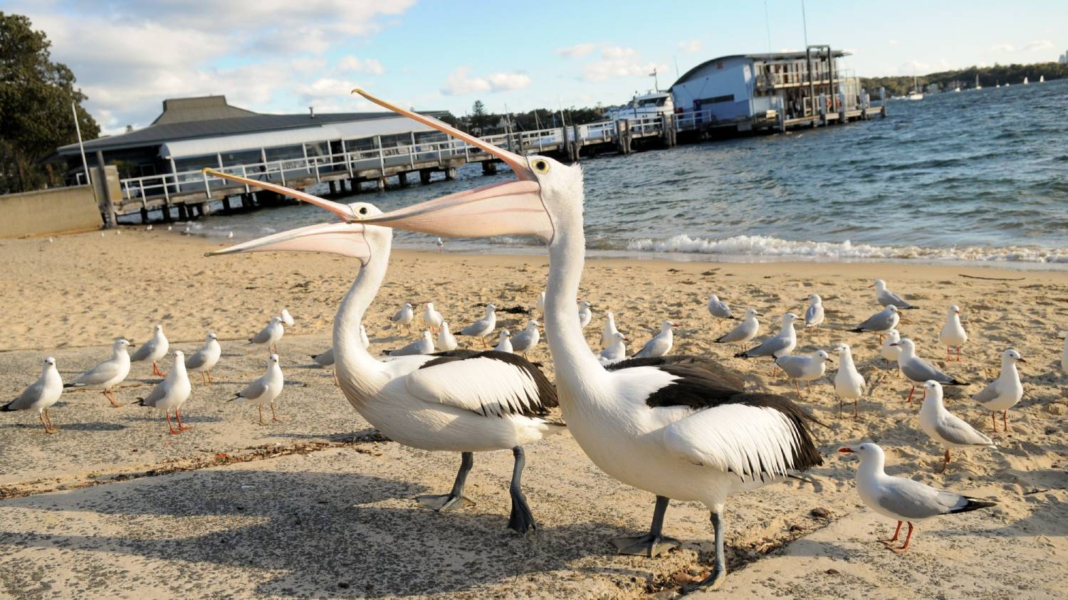 Watsons Bay - Things To Do In Sydney