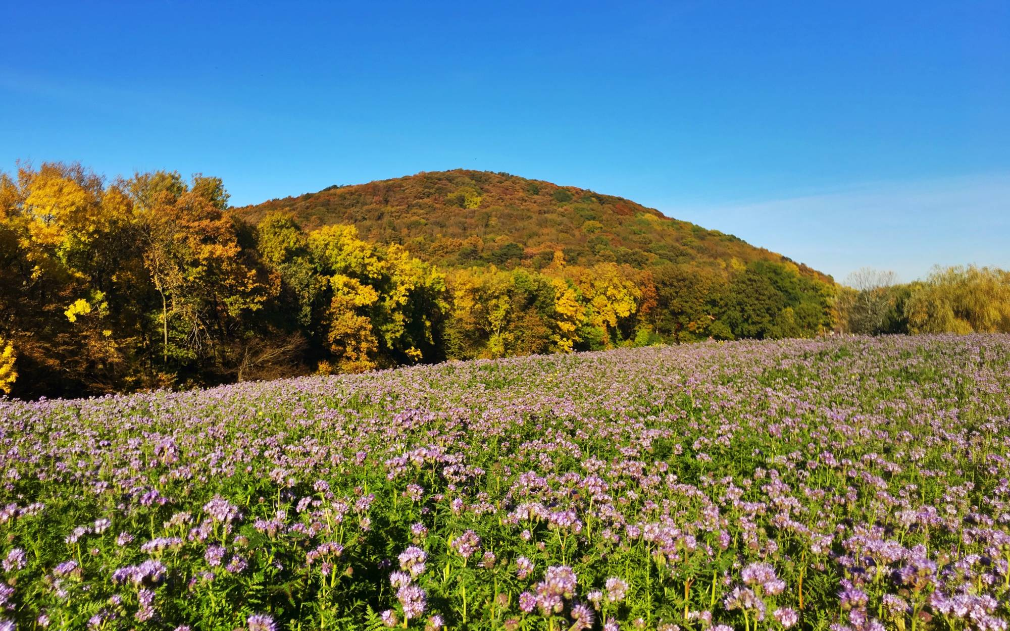 Wienerwald - The 7 Best Places To Experience The Vienna Woods