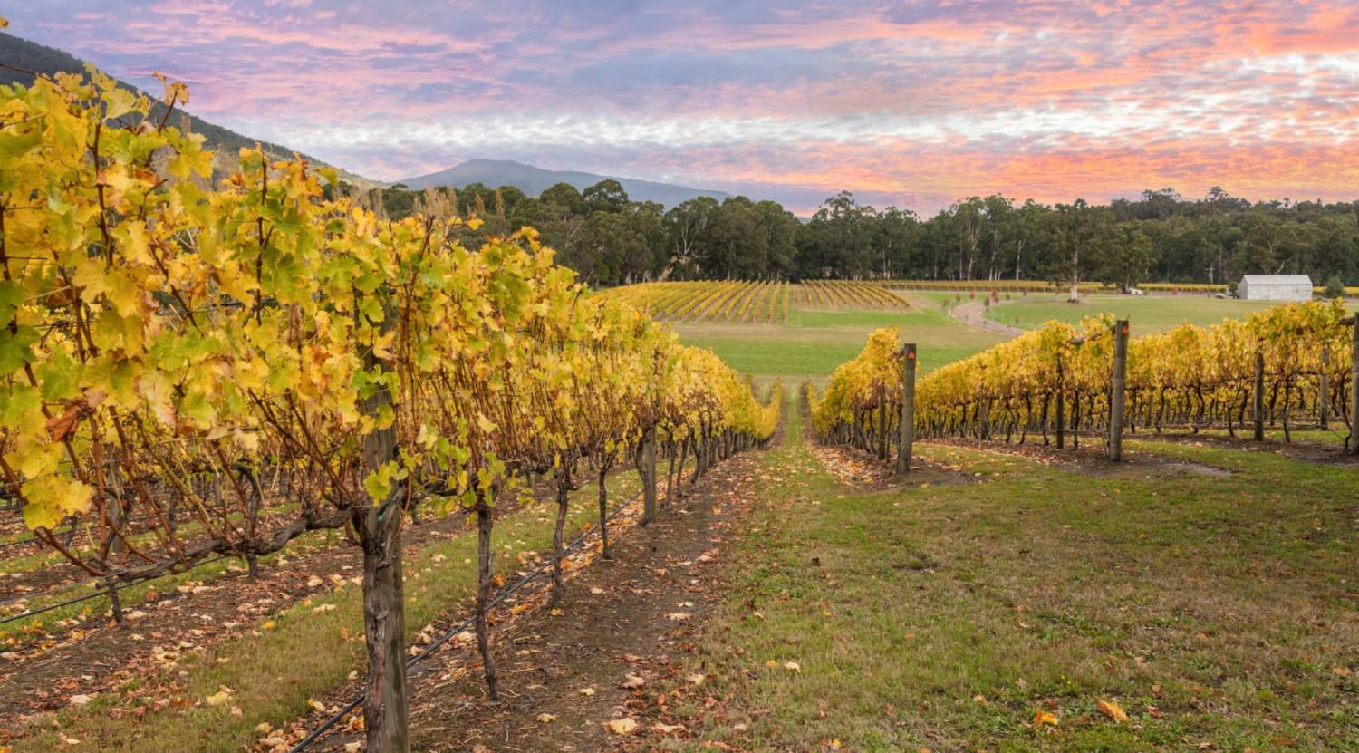 Yarra Valley - The Best Places To Visit In Australia