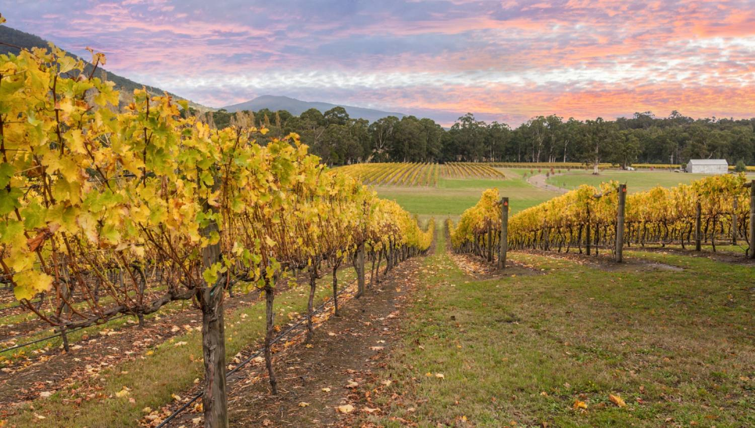 Yarra Valley - Things To Do In Australia